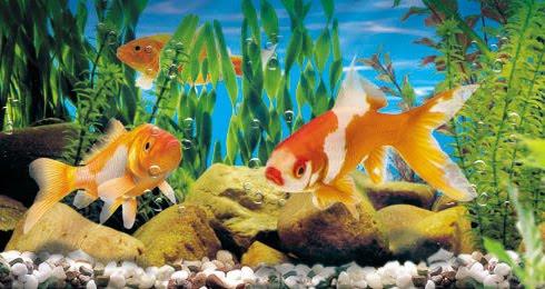 acuariopeces-agua-fria1