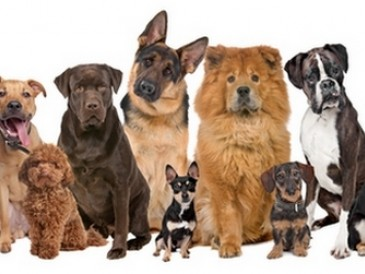 Cómo instalar un criadero de perros ¿Qué raza elijo?