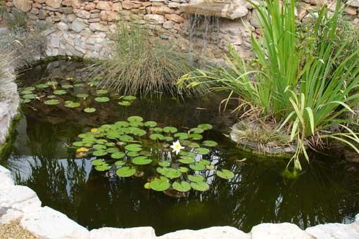 Instalar bonitos estanques y cómo decorarlos: Generalidades
