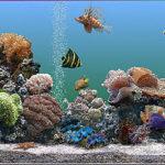Cómo instalar un acuario Tropical de agua salada
