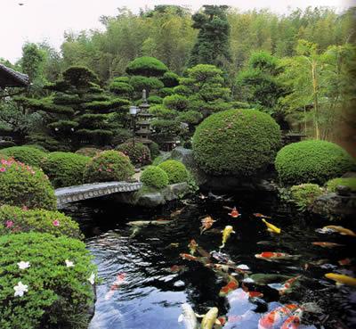 C mo instalar un bonito estanque con peces koi for Estanque de agua 4000 litros