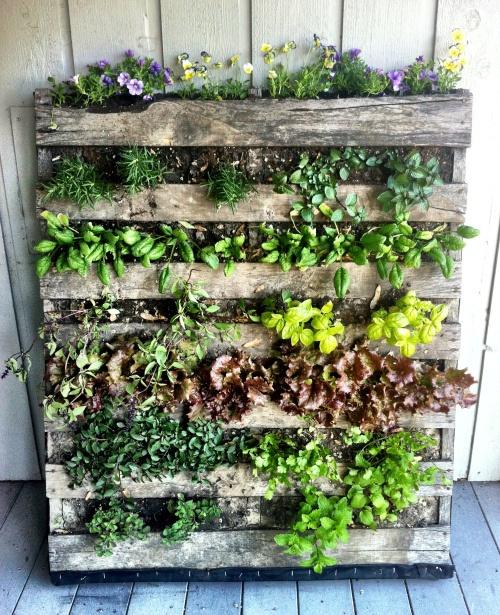 C mo instalar un jard n vertical en el balc n aportando verde for Jardin potager de balcon