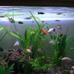 Como instalar un acuario atractivo en tu hogar
