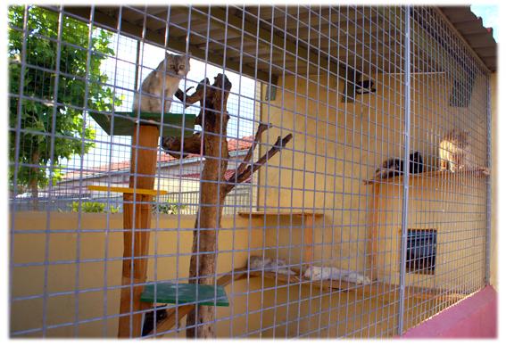C mo instalar un criadero de gatos redituable for Como hacer un criadero de cachamas
