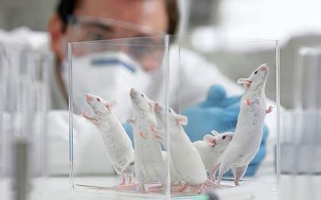Prueban en ratones una molécula sintética para eliminar VIH latente