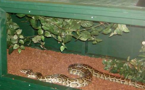Cómo instalar un criadero de serpientes para mascotas: Cuidados básicos para la reproducción