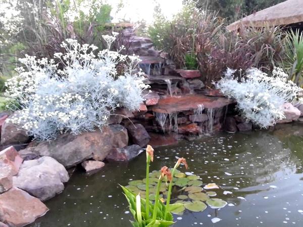 Como instalar un criadero de ranas en un estanque de su casa for Charcas de jardin