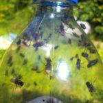 ¿Cómo hacer e instalar una trampa para moscas?