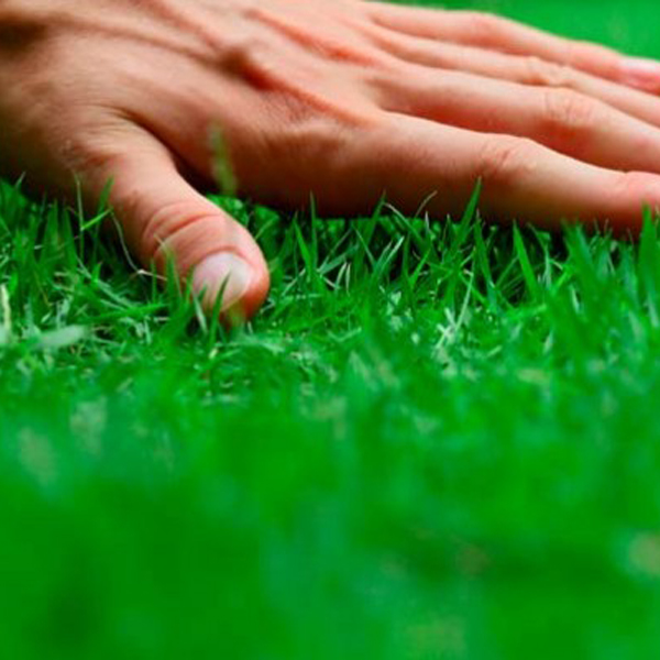 Como plantar césped en tu jardín