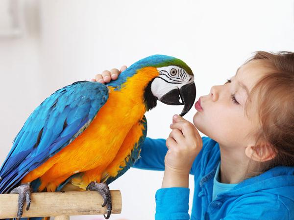 Cosas a tener en cuenta para criar pájaros
