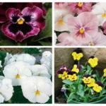 Como sembrar pensamientos en tu jardín