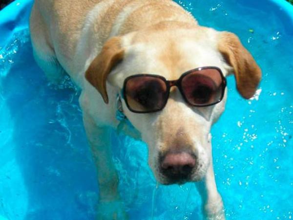 Como mantener fresca a tu mascota en verano