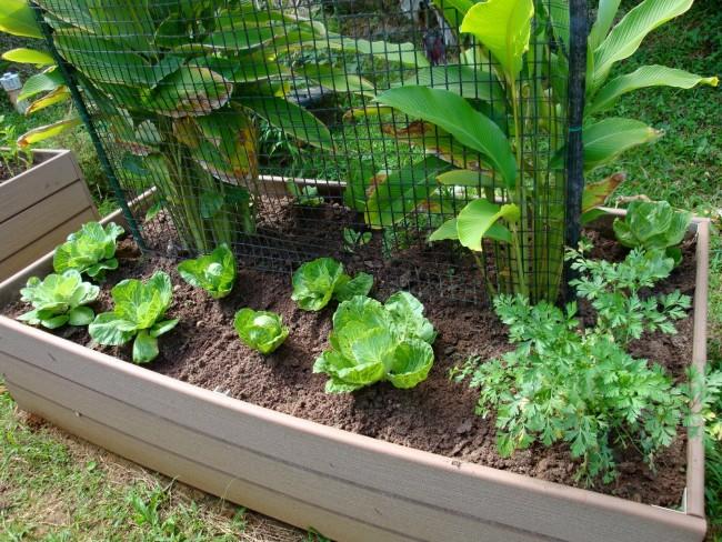 Algunos consejos para colocar una huerta en tu patio