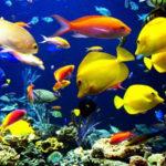 Cómo mantener los peces vivos en tu pecera