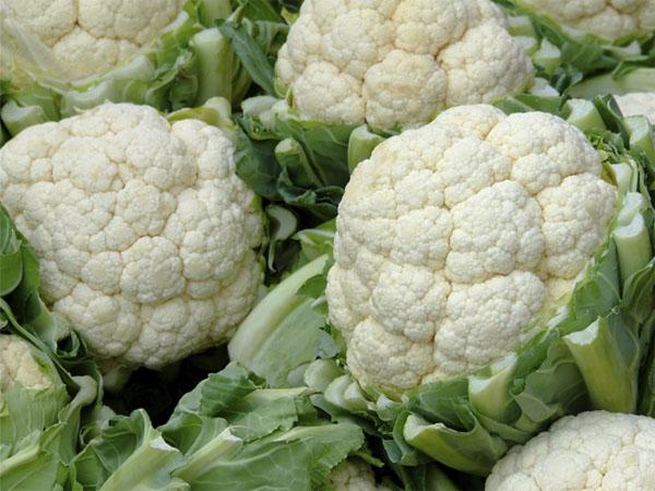Como cultivar coliflor en tu propia huerta