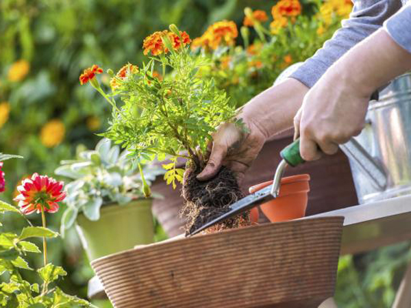 Consejos para hacer jardinería como un profesional: Instalar un jardín