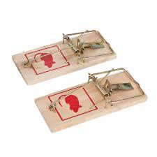 Cómo instalar trampas para ratones ¡Sorprendente!