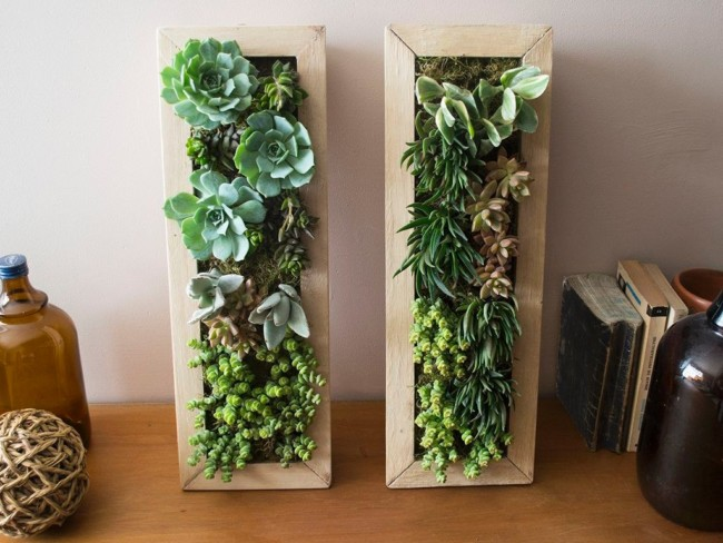 jardincuadro-vivo-suculentas-jardin-vertical-45x15-cm-184811-MLA20651016638_032016-F