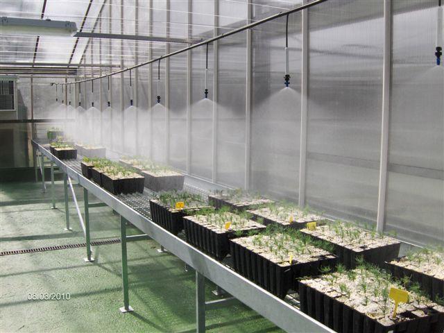 Montar un peque o invernadero en el jardin Plantas de invernadero