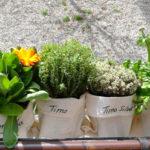 Cómo instalar una pequeña huerta urbana de aromáticas