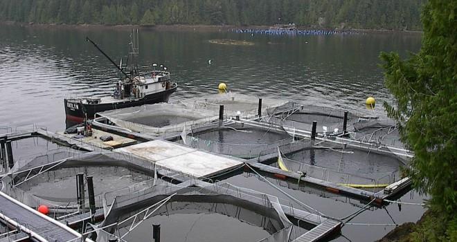 Como instalar un criadero de salmones for Como hacer un criadero de mojarras