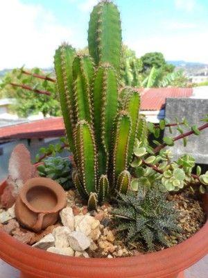 Como hacer rocallas peque as o jardines con piedras chicos - Cactus en macetas pequenas ...