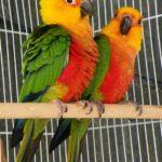 Instalar un criadero de Papagayos ¿Cómo hacerlo?