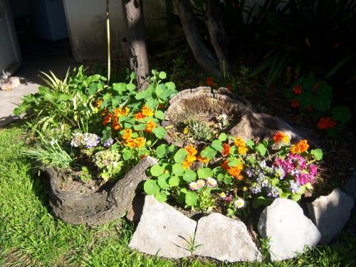 Decoraci n de jardines con rocallas grandes y peque as - Plantas para rocallas ...