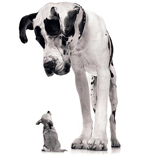 criaderoomprar-un-perro