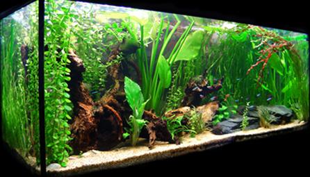 acuario-agua-dulce1