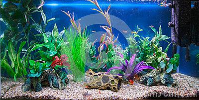 acuario-tropical-del-tanque-de-pescados-27234173