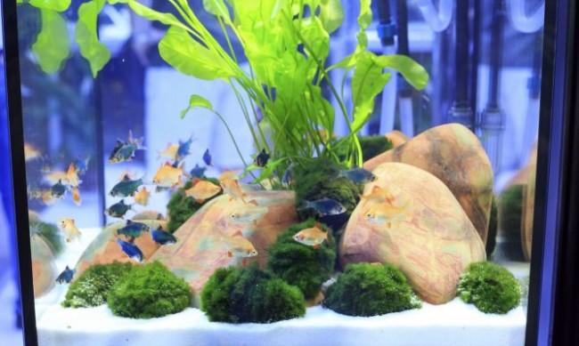 acuariodeko_mascotas_054_acuario-peces-tropicales-agua-dulce-xl-668x400x80xX