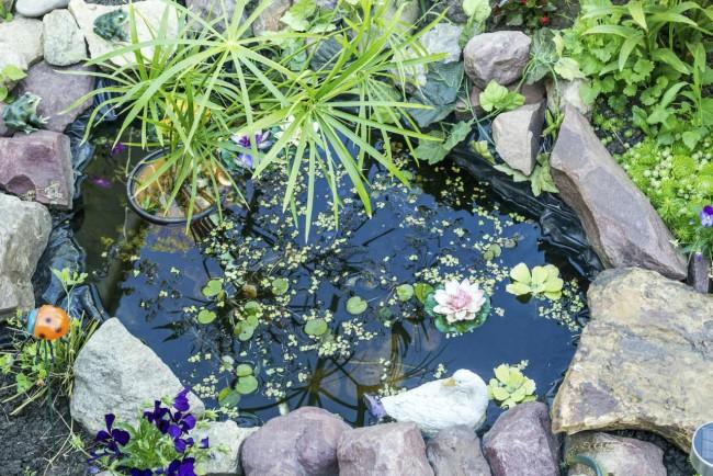 Instalar bonitos estanques y c mo decorarlos generalidades - Disenar un jardin pequeno ...