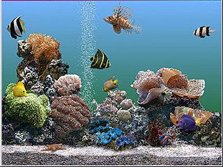 Acuarios-de-agua-salada