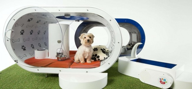 cuchassamsung-dream-doghouse