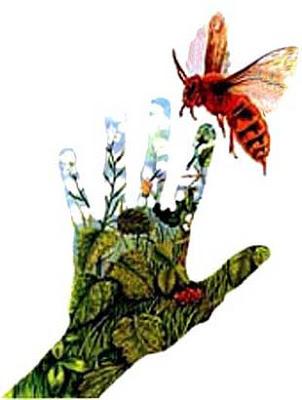 insectosamor de locos robinson y carminia