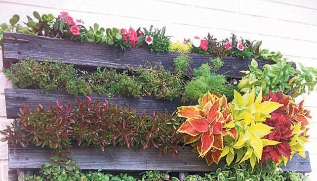 C mo instalar un jard n vertical con xito informaci n for Como hacer un jardin vertical con palets