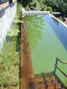 C mo instalar una biopiscina o piscina ecol gica for Como hacer una piscina ecologica