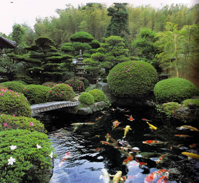 C mo instalar un bonito estanque con peces koi for Como instalar un estanque de agua