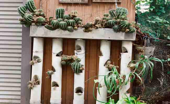 vertical-cactus
