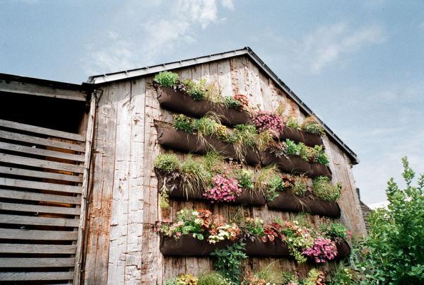 zzzzzzzzzzz54eb5c7f16e17_-_rden-on-building-wall-how-to-plant-vertical-garden-0412-xln