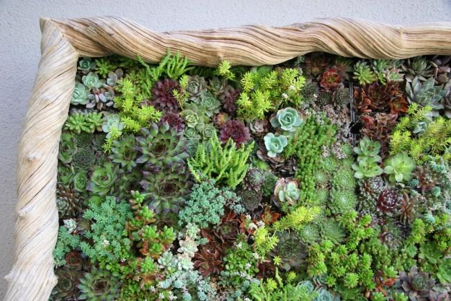 C mo instalar un jard n vertical hidrop nico en casa - Jardin hidroponico ...