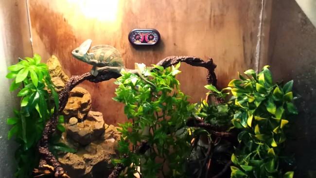camaleonmaxresdefault