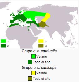 jilguero-distribucion