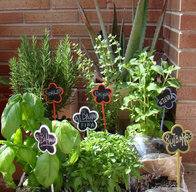 minihuerta jardin de piso 16 de mayo