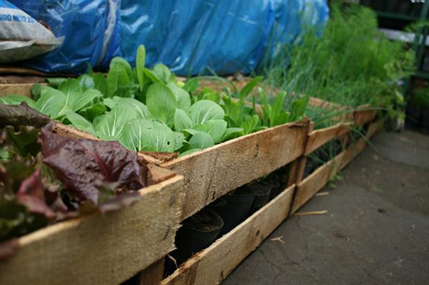 C mo instalar una mini huerta en el balc n for Huerta de aromaticas en macetas