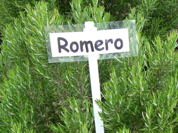 PlantaDeRomero