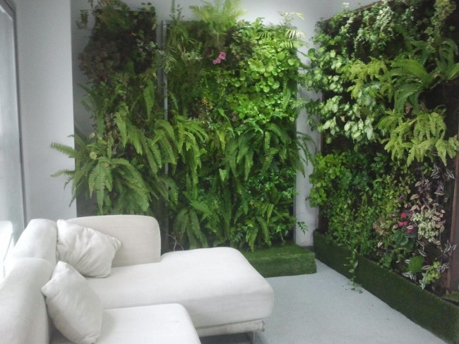 Consejos para instalar un jard n vertical for Plantas utilizadas en jardines verticales