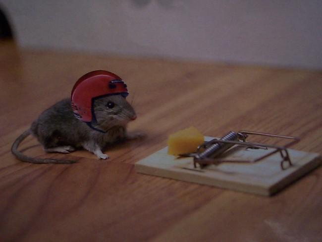 Cómo hacer e instalar una trampa para ratones?