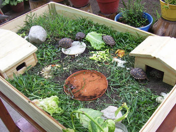 Como criar tortugas de agua en tu hogar instalar criadero for Estanques pequenos para tortugas